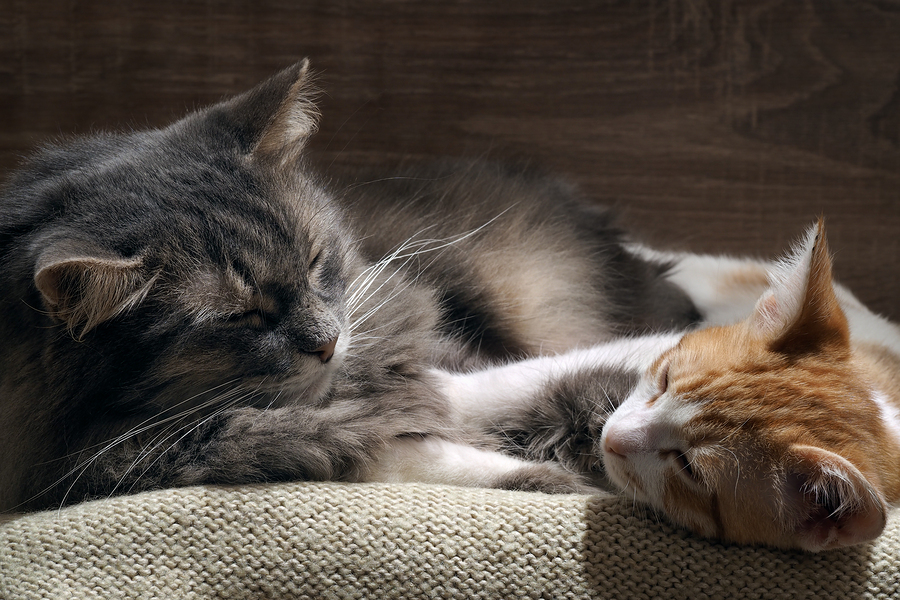 Can Exposure to Cats Actually Protect Against Asthma?