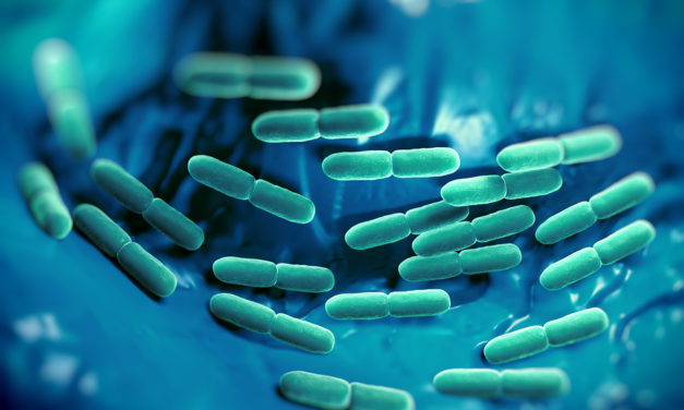 Bacteria in Bowel Linked to Weight Gain