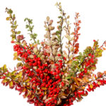 Antioxidant Activity and Other Qualities of Berberine